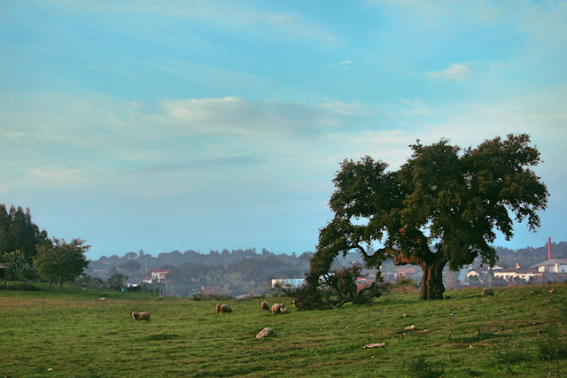 tree-no-person-cropland-landscape-agriculture picture material
