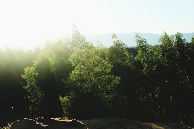 landscape-tree-nature-light-no-person picture material