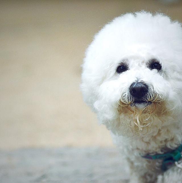 mammal-no-person-dog-cute-fur picture material
