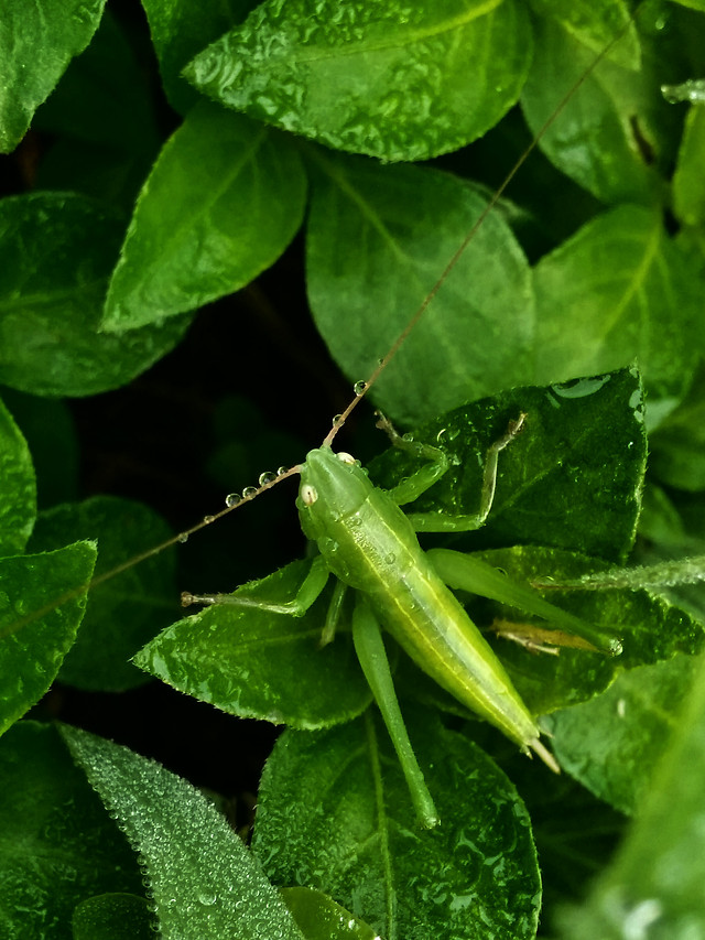 leaf-no-person-nature-flora-insect picture material