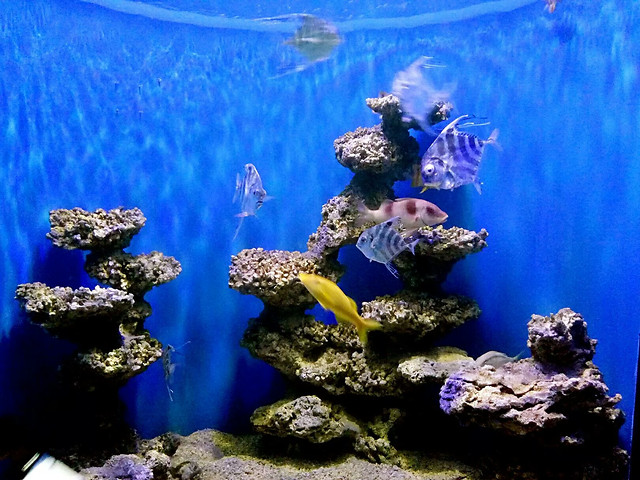 underwater-aquarium-water-fish-swimming picture material