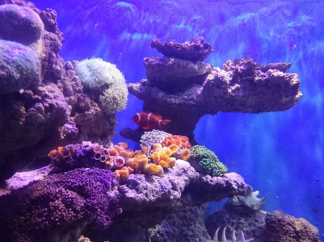 underwater-coral-reef-fish-ocean picture material