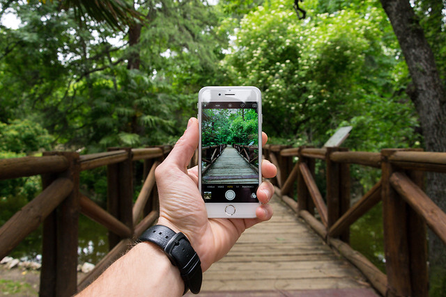 wood-outdoors-tree-nature-park picture material