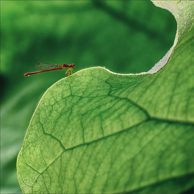 leaf-flora-garden-nature-environment picture material