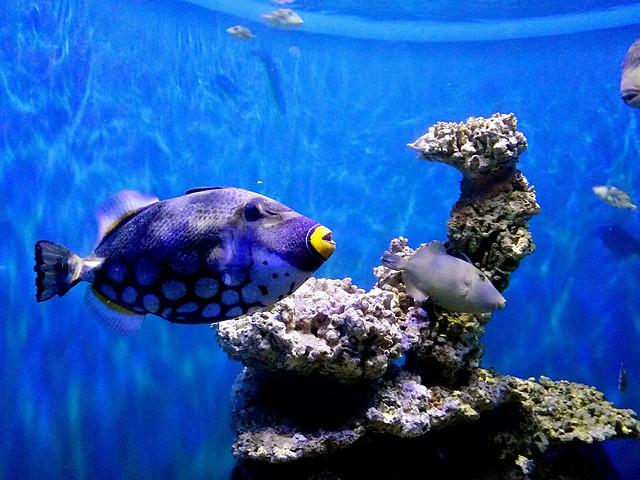 underwater-fish-aquarium-swimming-coral picture material