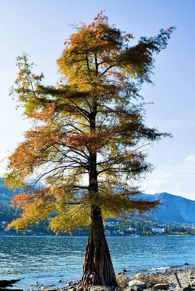 tree-nature-no-person-fall-landscape picture material