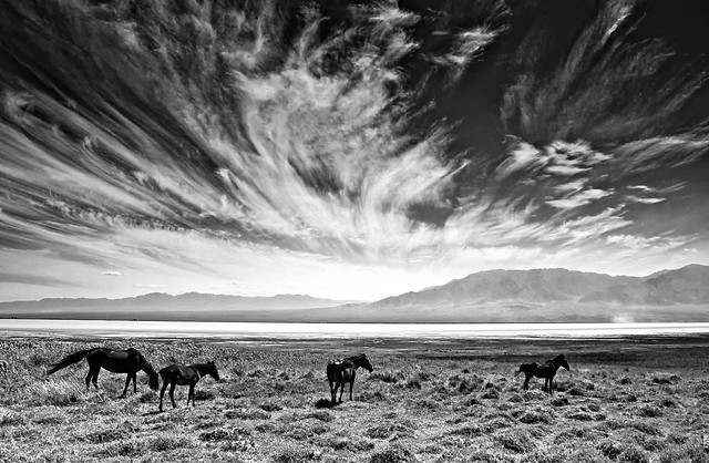 no-person-outdoors-cavalry-sky-monochrome picture material