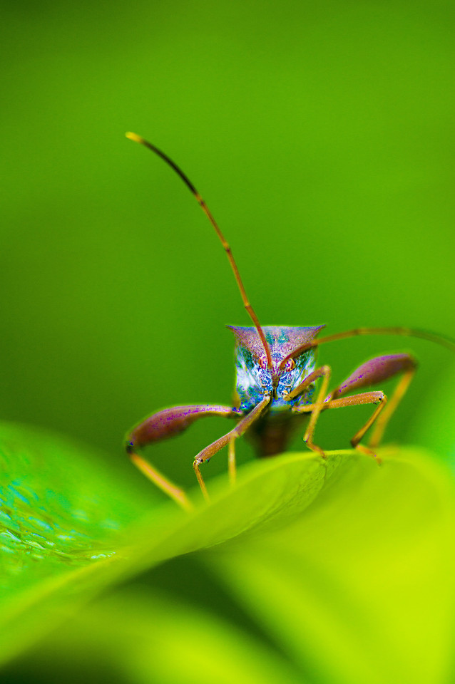 insect-nature-leaf-no-person-wildlife picture material