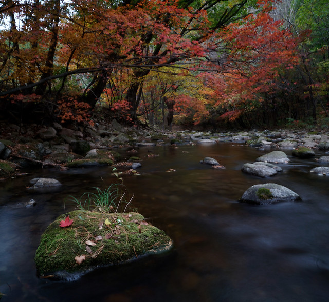 fall-stream-water-river-leaf picture material