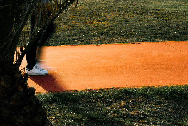 no-person-landscape-tree-grass-recreation picture material