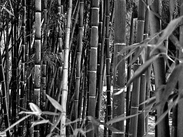 bamboo-old-no-person-fence-desktop picture material