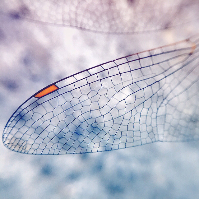 desktop-pattern-nature-color-wing picture material