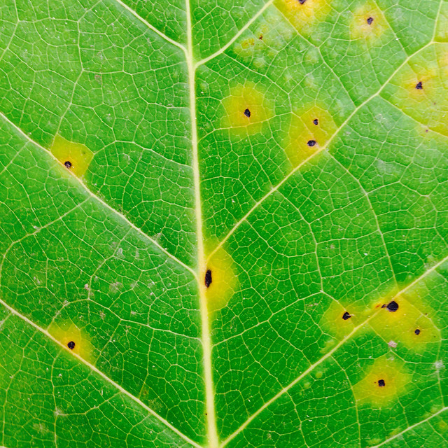 leaf-flora-nature-growth-environment 图片素材
