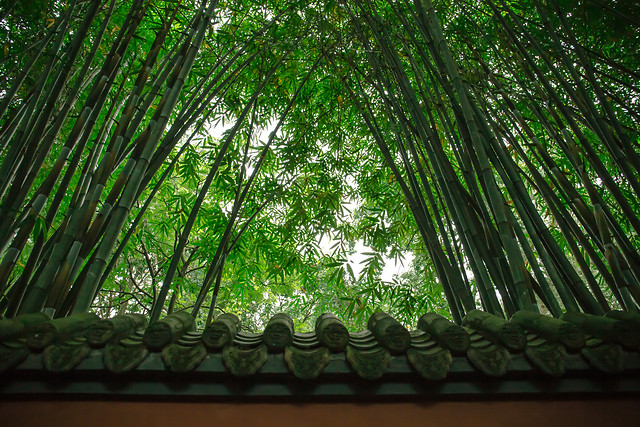 bamboo-leaf-wood-tree-flora picture material