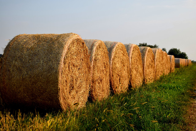 no-person-hay-straw-rural-agriculture picture material