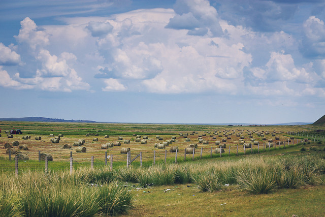 grassland-sky-prairie-field-grass picture material