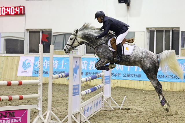horse-show-jumping-competition-english-riding-equestrianism picture material