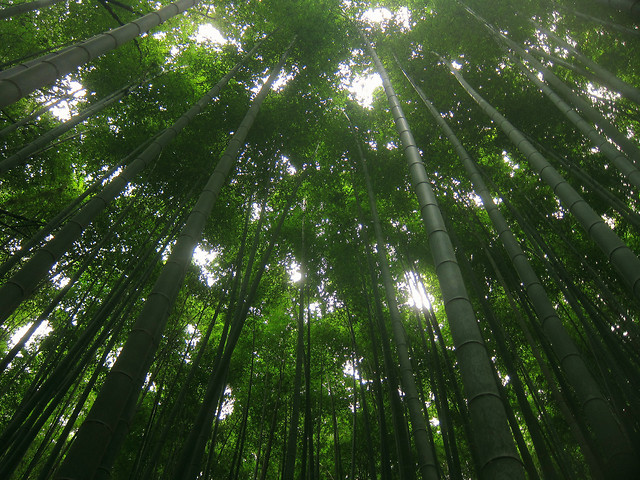 leaf-bamboo-lush-nature-jungle picture material