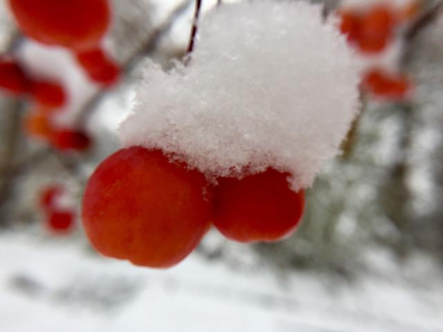 winter-snow-christmas-frost-icee 图片素材