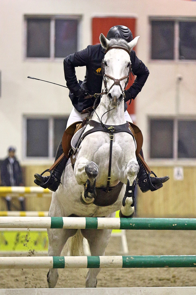 horse-cavalry-equestrian-competition-rider picture material