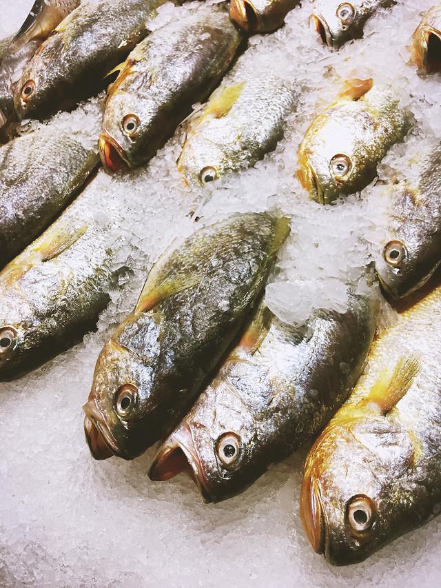 fish-sardine-seafood-icee-sea 图片素材