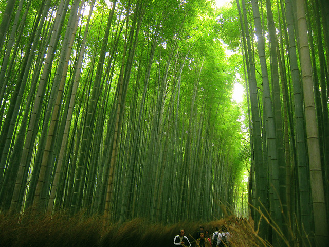 bamboo-lush-leaf-nature-wood picture material