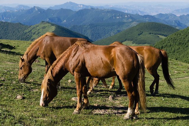 pasture-mare-hayfield-grass-field picture material