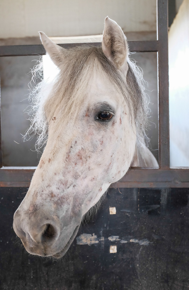 horse-nature-animal-head-portrait picture material