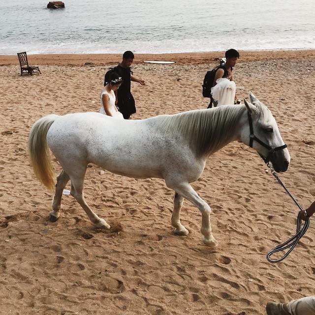 cavalry-horse-mammal-mare-equine picture material