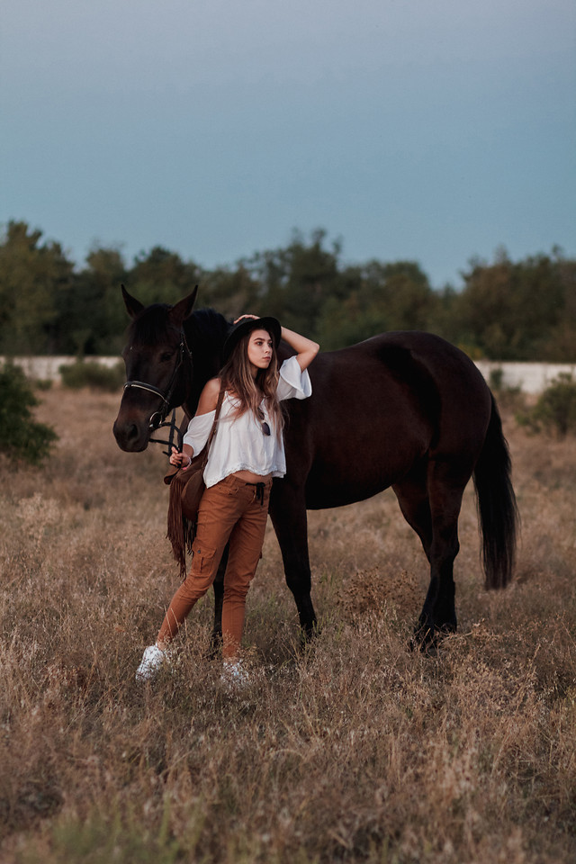 mammal-cavalry-horse-mare-grass picture material