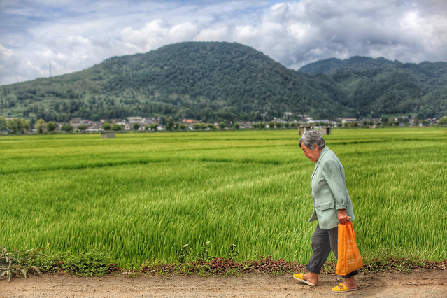 cropland-rice-agriculture-landscape-paddy-field picture material