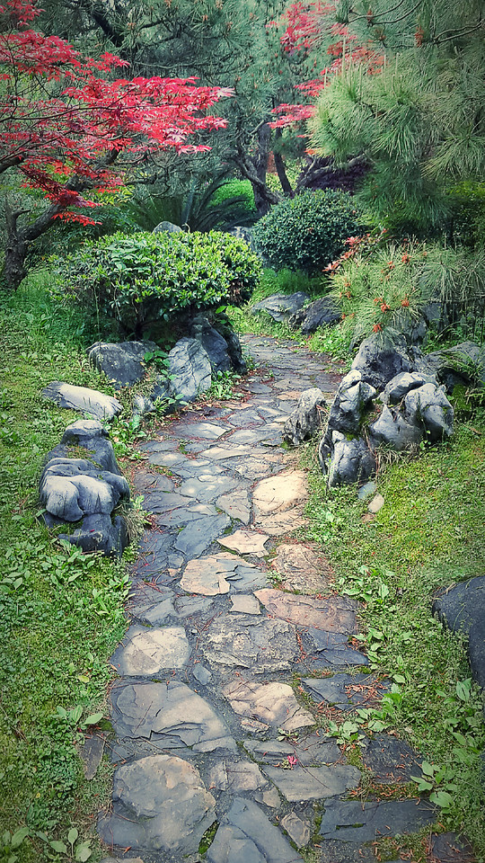 garden-nature-park-stone-tree picture material