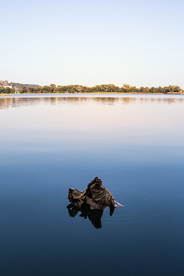 water-reflection-river-lake-bird picture material