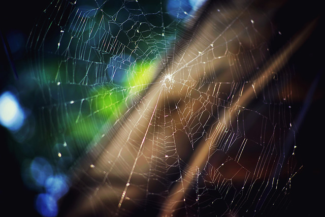 spider-web-web-together-spiderweb-insubstantial picture material