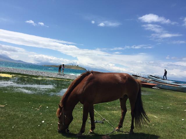 horse-mare-no-person-cavalry-mammal picture material