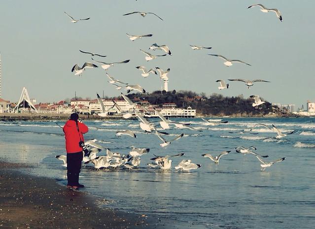 water-seagulls-bird-beach-sea picture material
