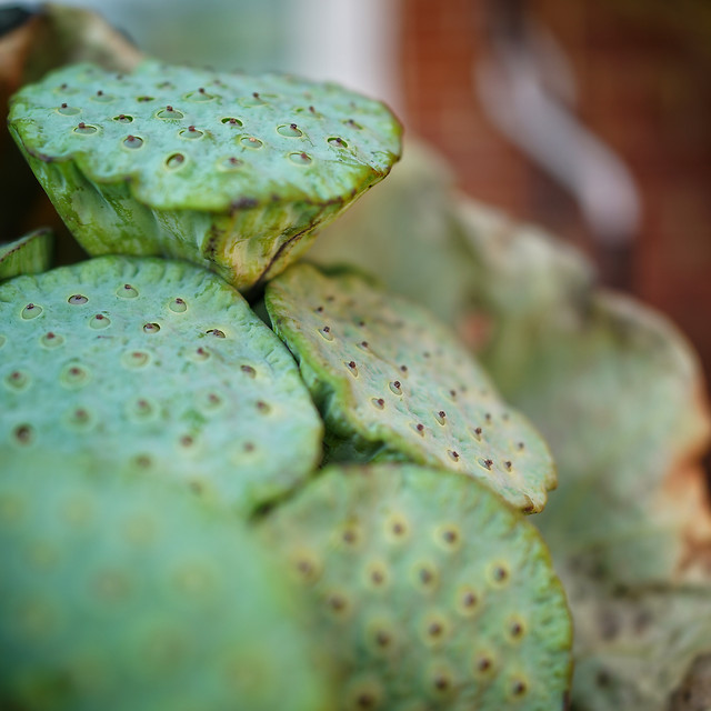 no-person-nature-exotic-cactus-tropical picture material