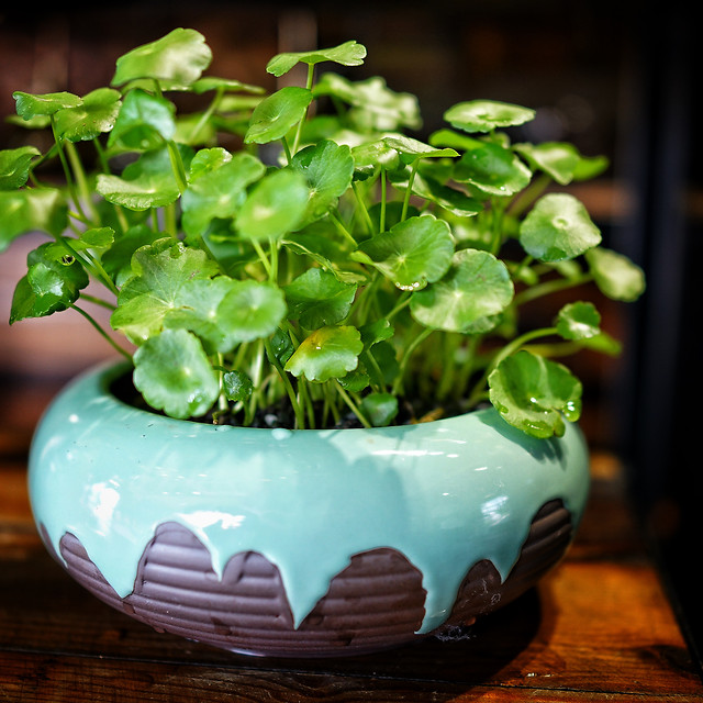 leaf-pot-flora-medicine-food picture material