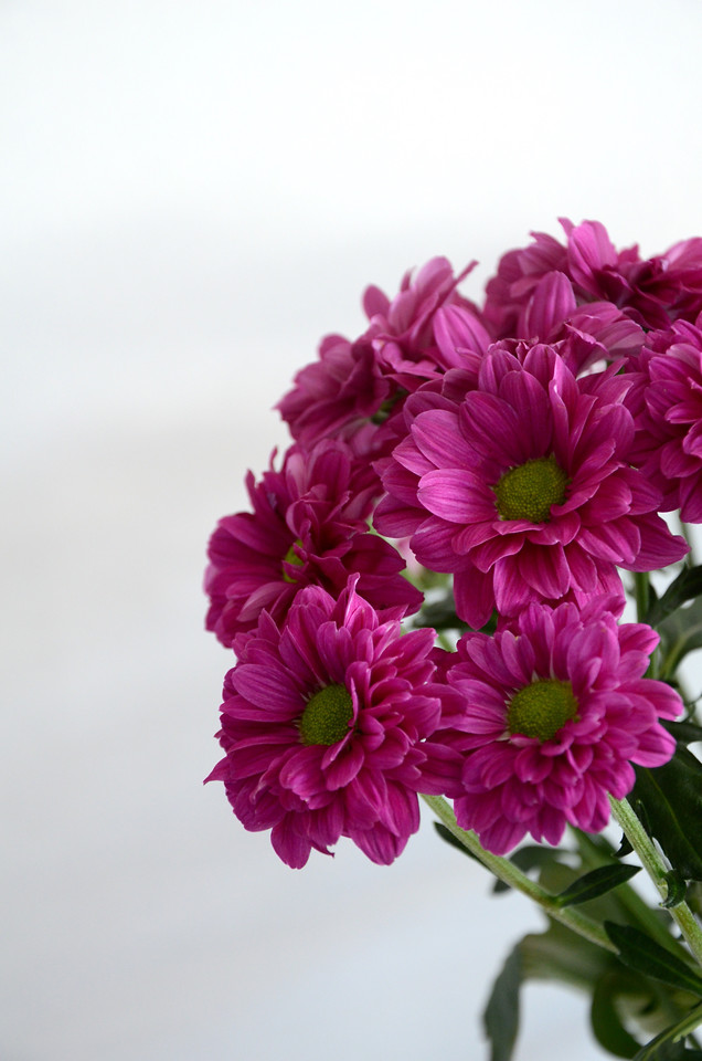 flower-nature-flora-petal-floral picture material