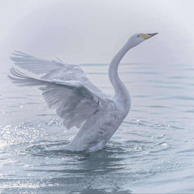 bird-water-no-person-nature-wildlife picture material