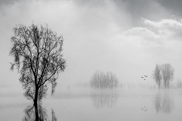 fog-mist-tree-winter-landscape picture material