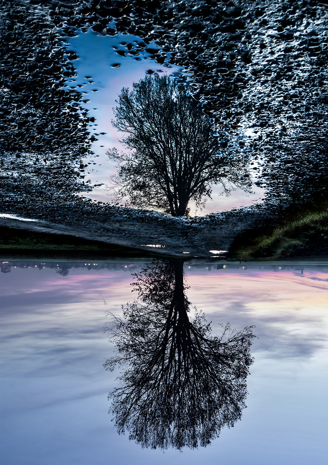 water-tree-reflection-landscape-no-person picture material