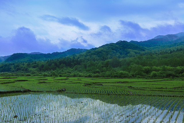 rice-no-person-agriculture-landscape-cropland picture material
