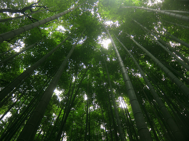 leaf-nature-bamboo-tree-lush picture material