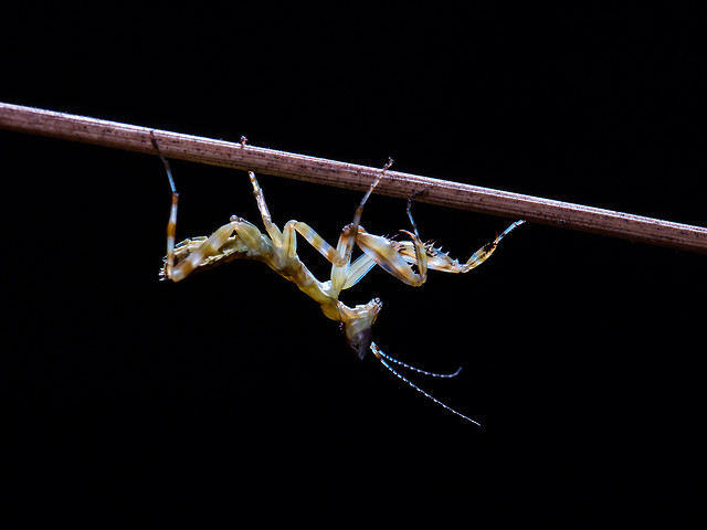insect-invertebrate-wildlife-no-person-fly picture material
