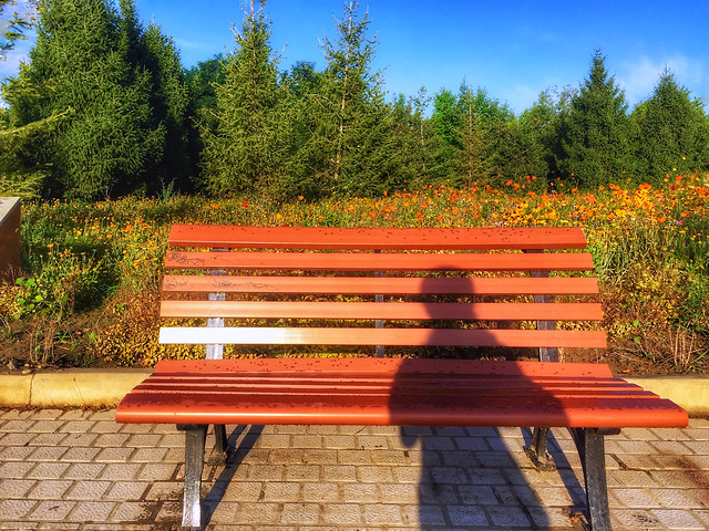 bench-wood-no-person-seat-outdoors picture material