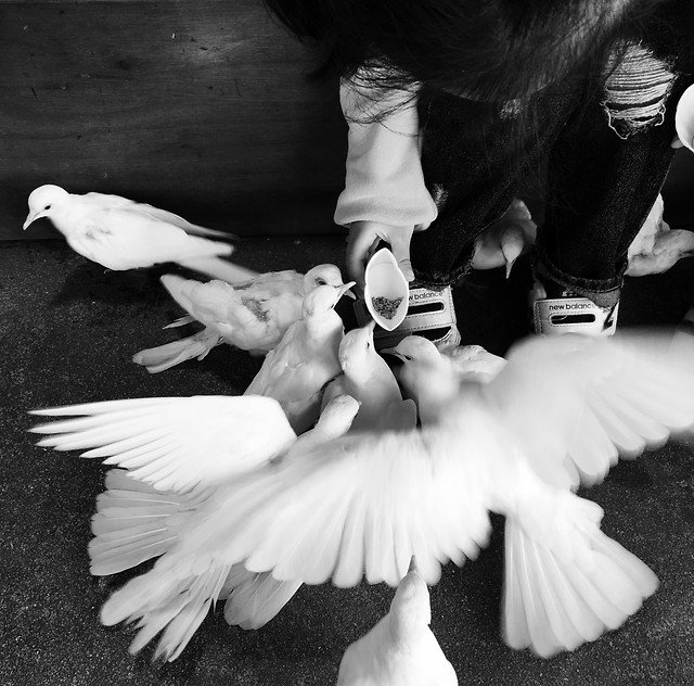 monochrome-ballerina-people-pigeon-dancer picture material