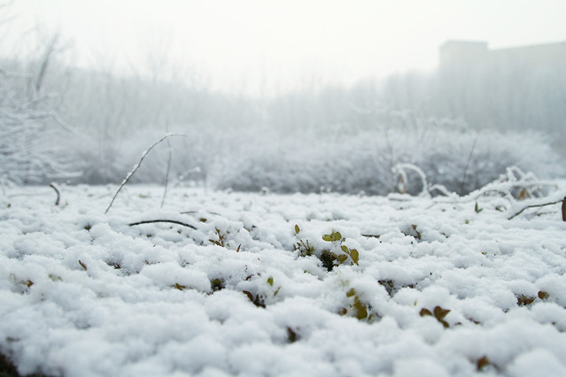 snow-winter-frost-cold-frozen picture material