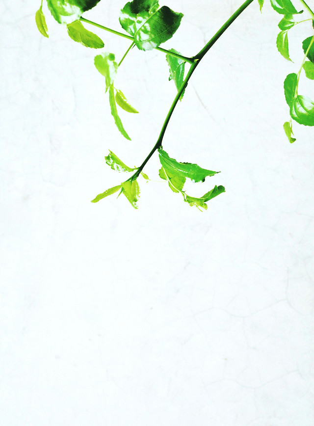 leaf-flora-growth-nature-no-person picture material