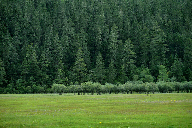 landscape-wood-tree-nature-no-person picture material